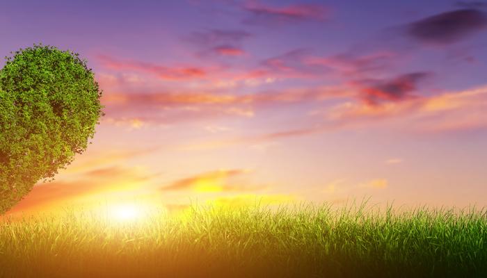 Heart shape tree on grass field at sunset. Love, panorama